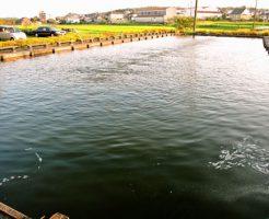 十三塚つりぼり(釣り堀)知多半島の釣り堀